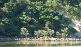 Rio e Mata Atlântica